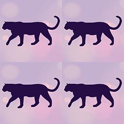 Moor Cats
